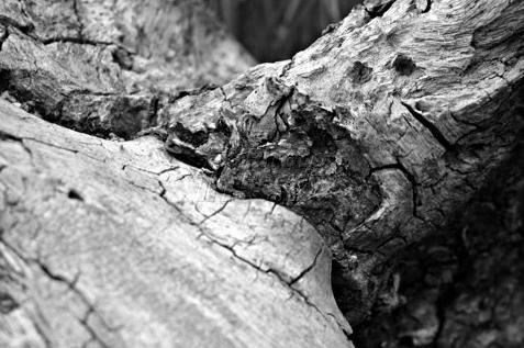 stump2